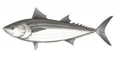 Nuestros pescados