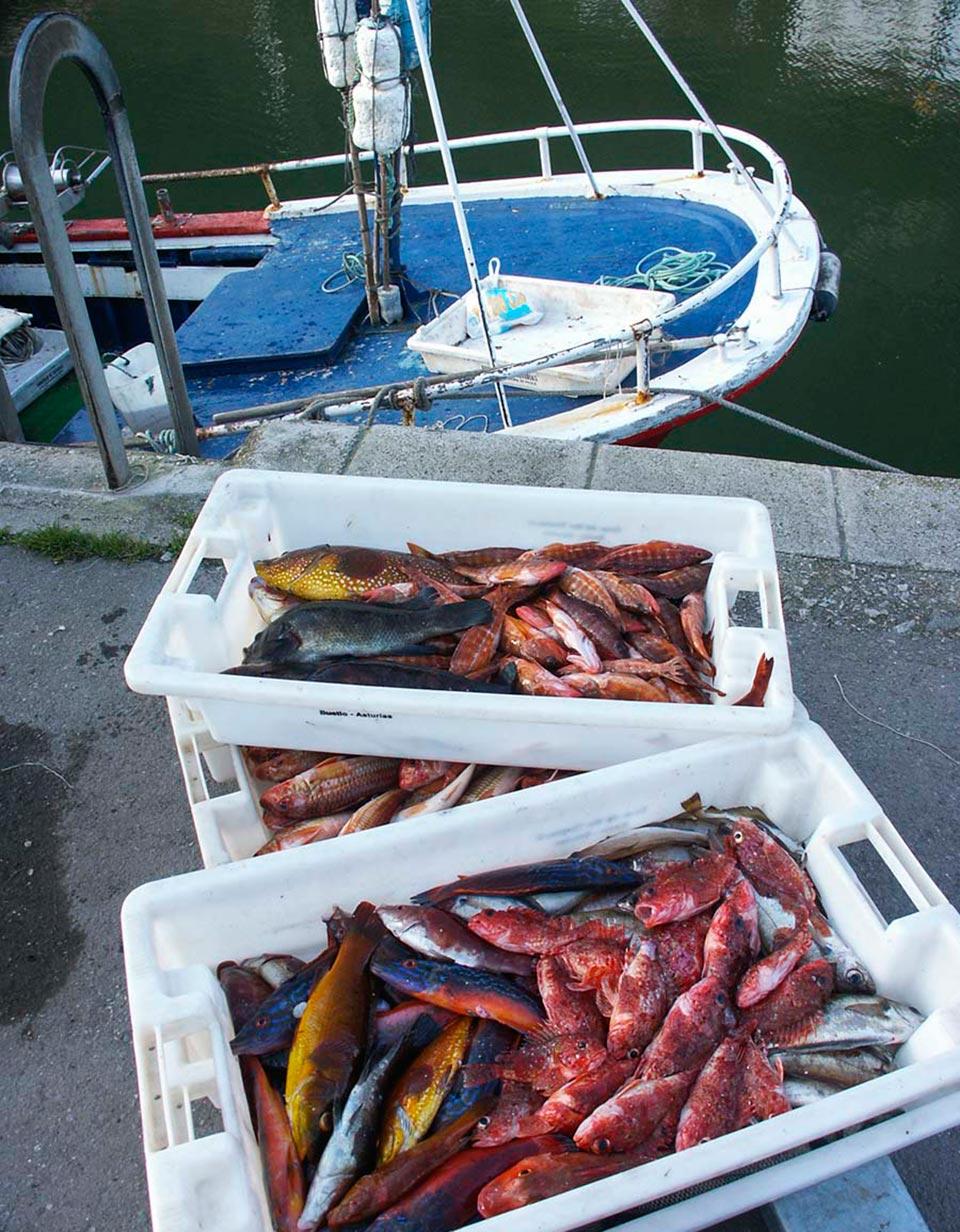 Cuadernos de Pesca