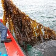 El Programa de Desarrollo Pesquero del Oriente de Asturias aprueba ayudas para nueve proyectos