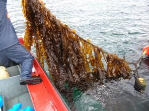 El Programa de Desarrollo Pesqueo del Oriente de Asturias aprueba ayudas para nueve proyectos